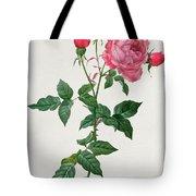 Rosa Indica Tote Bag
