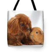 Ruby Cavalier King Charles Spaniel Pup Tote Bag by Mark Taylor
