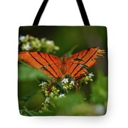 Ruddy Daggerwing Butterfly Tote Bag