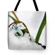 Scilla On Snow Tote Bag