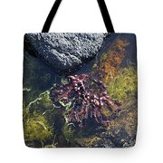 Seaweed Growing In A Rockpool On The Shore Roundstone County Galway Ireland Tote Bag