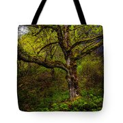 Secluded Tree Tote Bag
