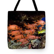 Shoulderbar Soldierfish Tote Bag