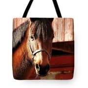 Show And Tell Tote Bag
