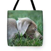 Silver Labrador Retriever Puppy  Tote Bag