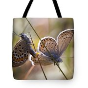 Silver-studded Blue Butterflies Tote Bag