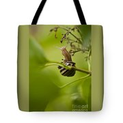 Snail Stretching Tote Bag