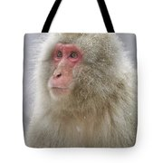 Snow-dusted Monkey Tote Bag