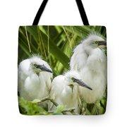Snowy Egret Chicks Tote Bag