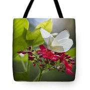 Southern White Butterfly  Tote Bag