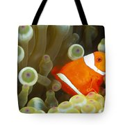Spinecheek Clownfish Tote Bag