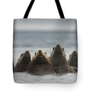 Stellers Sea Lion Eumetopias Jubatus Tote Bag by Michael Quinton