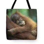 Sumatran Orangutan Pongo Abelii Two Tote Bag