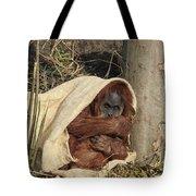 Sumatran Orangutang - Tote Bag