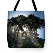 Sunbeams From Large Pine Or Fir Trees On Coast Of San Francisco  Tote Bag