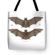 Sundevall's Roundleaf Bat Tote Bag