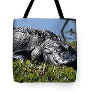 Sunning Gator Tote Bag