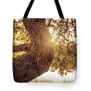 Sunset On A Tree Tote Bag
