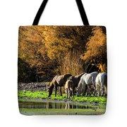 The Salt River Wild Horses  Tote Bag