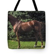 Thoroughbred Stallion Tote Bag