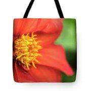Tithonia Rotundifolia, Red Flower Tote Bag