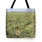Tomato Field, California Tote Bag