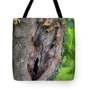 Tree Bark Detail, Natural Background. Tote Bag