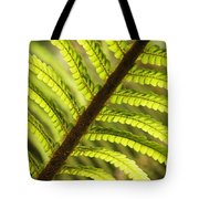 Tree Fern Frond Tote Bag