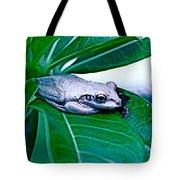 Tree Frog On Desert Rose  Tote Bag