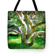 Tree In Golden Gate Park Tote Bag