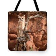 Treed Mountain Lion Tote Bag