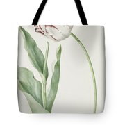 Tulip Grand Roy De France Tote Bag