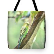 Two Adorable Budgie Parakeets Living In Nature Tote Bag