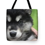Up Close Look At The Face Of An Alusky Puppy Dog Tote Bag