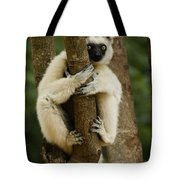 Verreaux's Sifaka Tote Bag