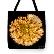 Wasp Nest, X-ray Tote Bag