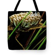 Water Beetle Brooding Eggs Tote Bag