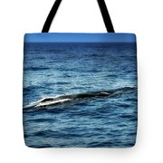 Whale Watching Balenottera Comune 3 Tote Bag