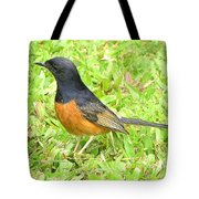 White-rumped Shama Tote Bag