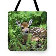 White-tailed Deer Odocoileus Tote Bag