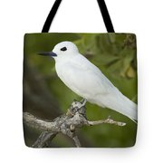 White Tern  Midway Atoll Hawaiian Tote Bag by Sebastian Kennerknecht