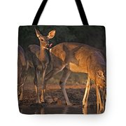 Whitetail Deer At Waterhole Texas Tote Bag by Dave Welling