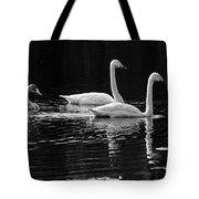 Whooper Swan Family Tote Bag