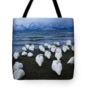 Whooper Swans In Winter Tote Bag
