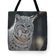Wild Lynx Cat Tote Bag