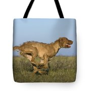 Wirehaired Vizsla Running Tote Bag