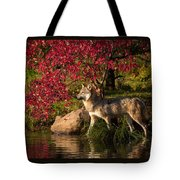 Wolf Portrait In Fall Tote Bag