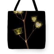 X-ray Of The Velvet Leaf Seed Pods Tote Bag