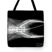 X Ray Plate Of Cat Tote Bag