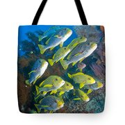 Yellow And Blue Striped Sweeltip Fish Tote Bag by Mathieu Meur